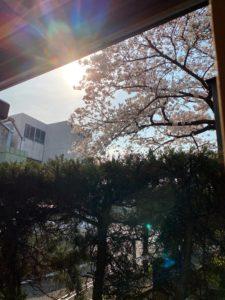 桜|工業用,産業用,自動車用フェルトの寺田タカロン